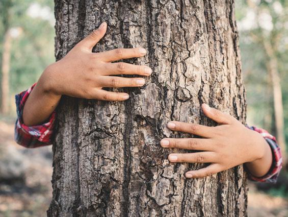 child's hands hugging tree