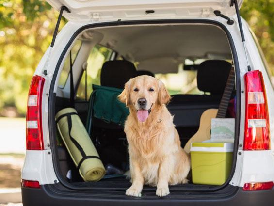 dog sitting in back of hatchback